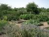 the-apothecarys-garden
